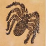 Baskin Spider