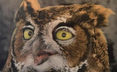 Owl, Walt Meade